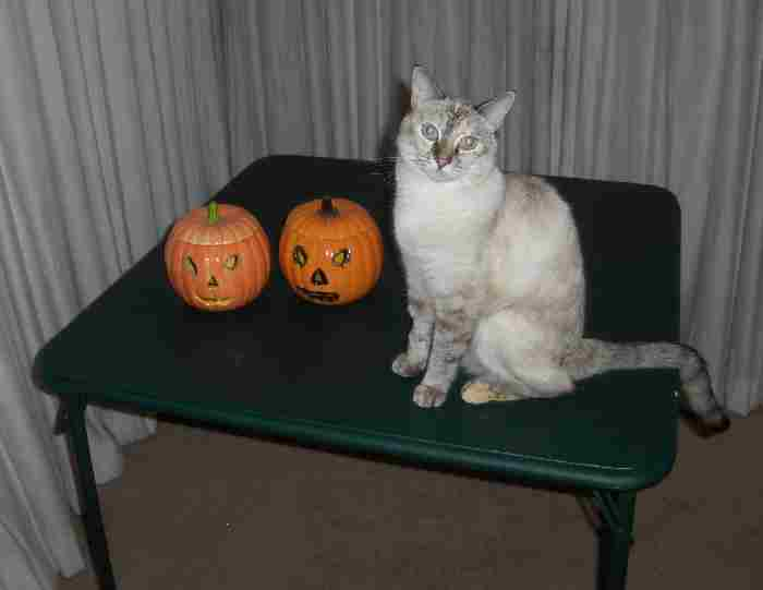 another Halloween kitty2