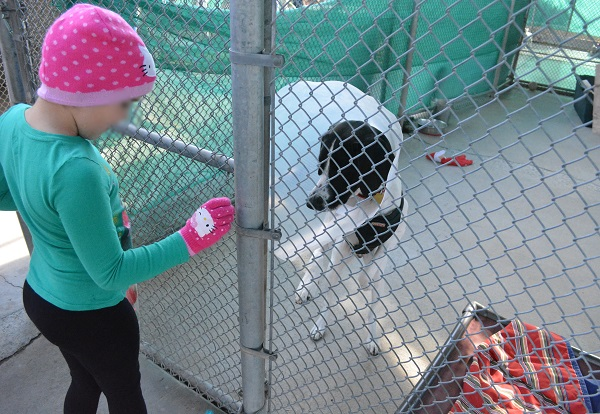 child in a pink cap feeds treats to a black and white dog